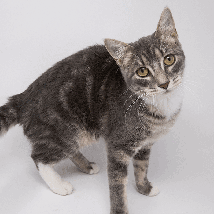 Sour Patch – Adopted