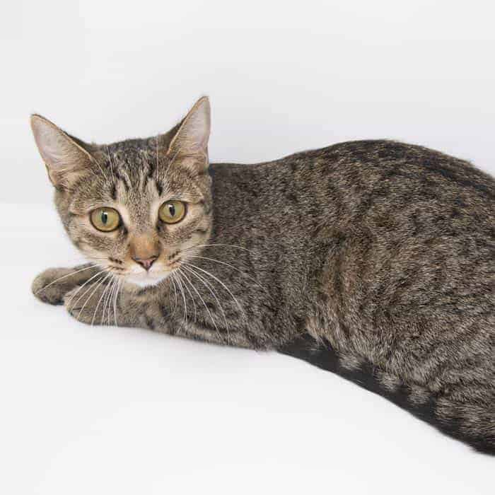 Stripes – Adopted