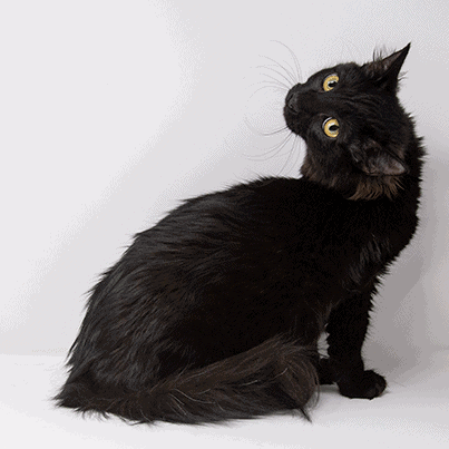 Donna – Adopted
