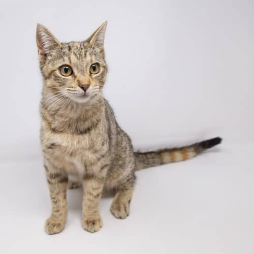 Snickerdoodle – Adopted