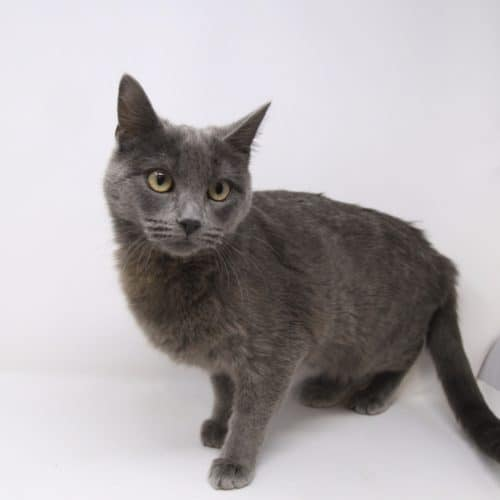 Meredith- Adopted