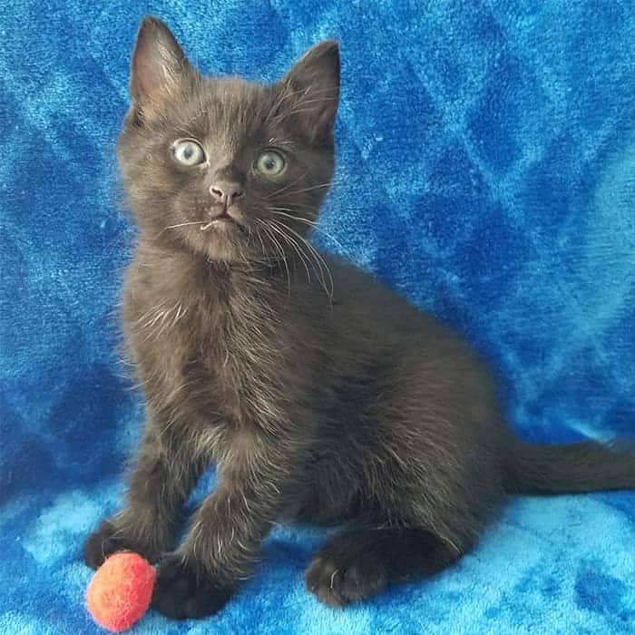 Takis – Adopted