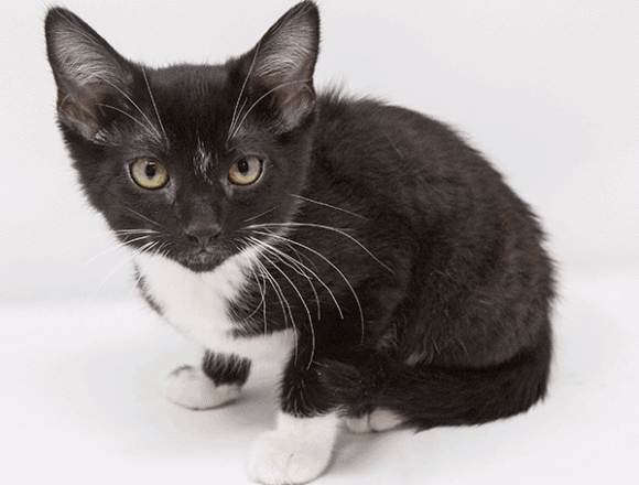 Doh Doh – Adopted