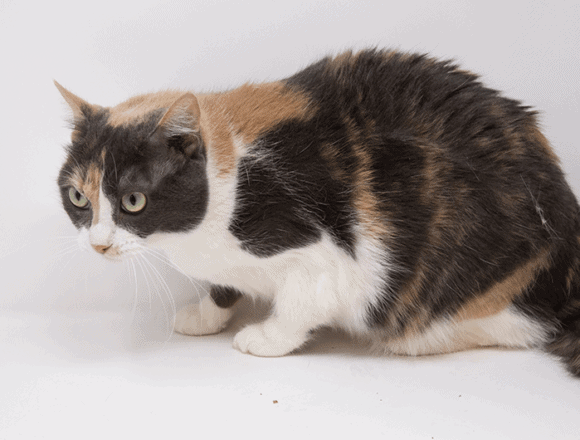 Minnie Mouse – Adopted