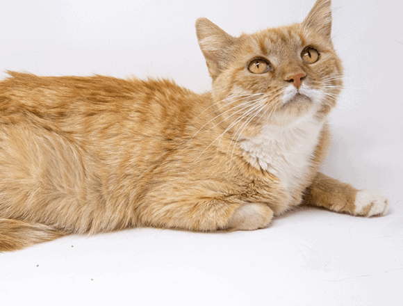 Lorien – Adopted