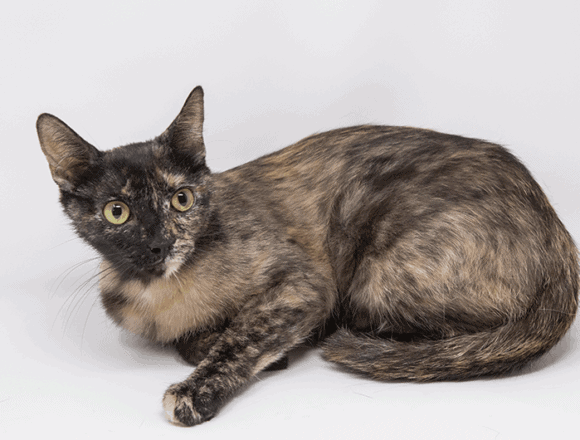 Tamale – Adopted