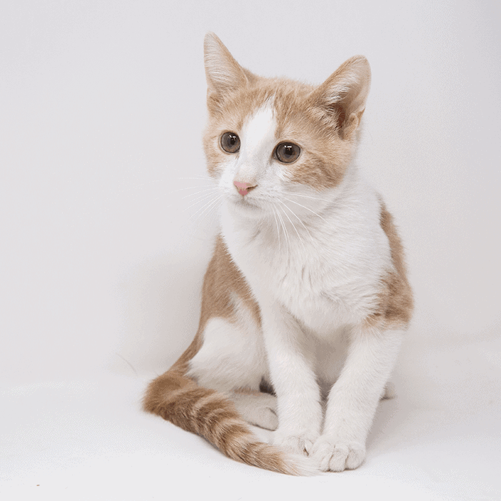 Bombadil – Adopted