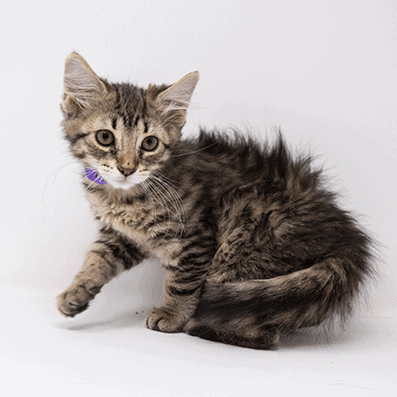 Eleanor – Adopted