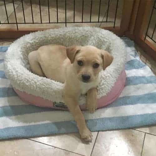 Izzy – Adopted