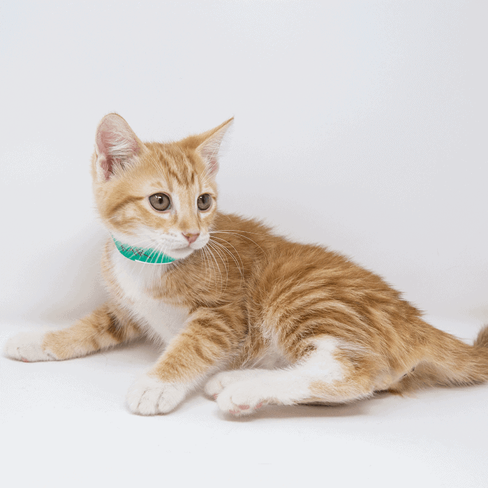 Mr. T – Adopted