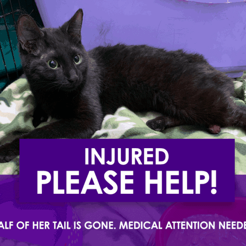 Peralta: HELP INJURED CAT