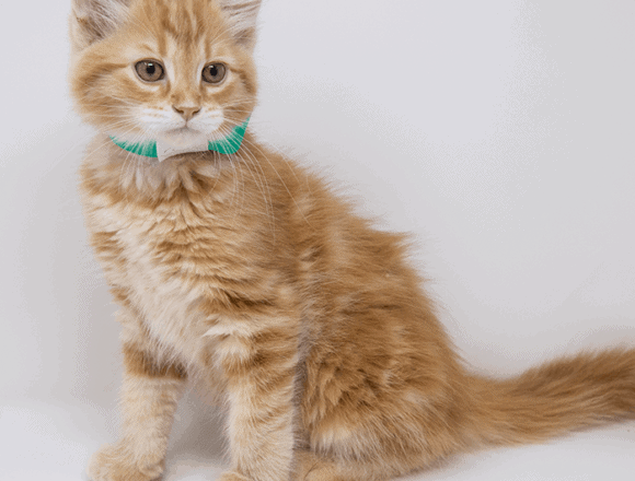 Whiskers – Adopted