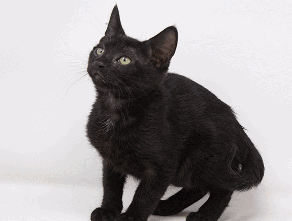 Brambleberry – Adopted