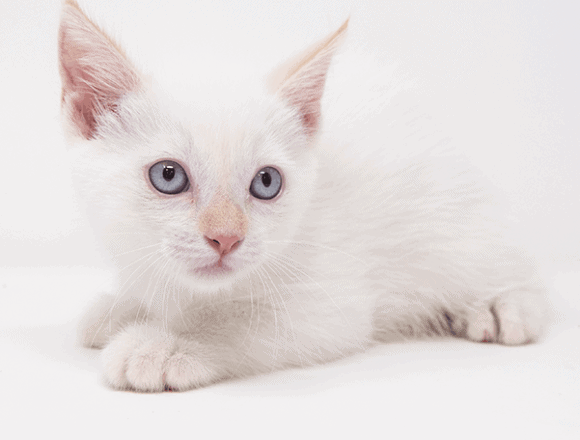 Marshmallow – Adopted