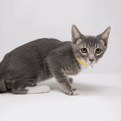 Jellybean – Adopted