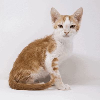 Marmo – Adopted