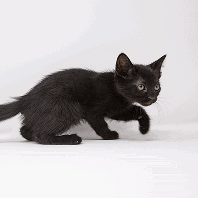 Uno – Adopted