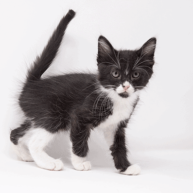 Wild – Adopted