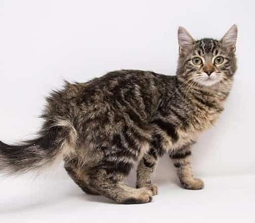 Tiger Lily – Adopted
