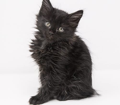 Black Panther – Adopted