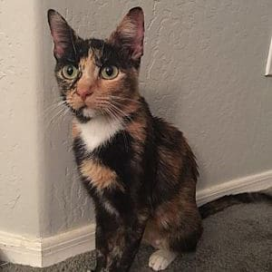 Shirley-Adopted