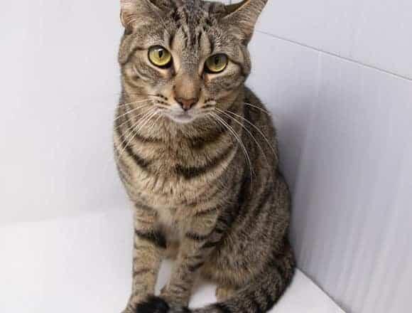 Fiona – Adopted