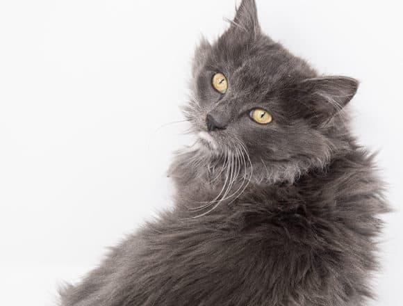 Backus-Adopted