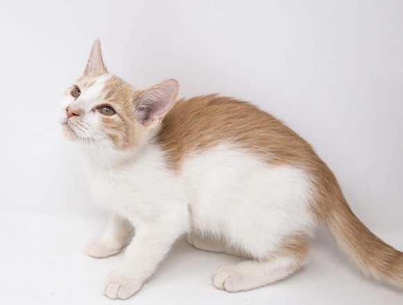 Catillac – Adopted