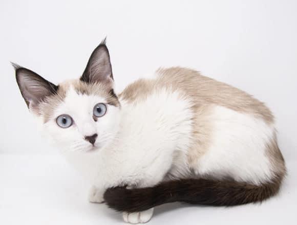 Reina – Adopted