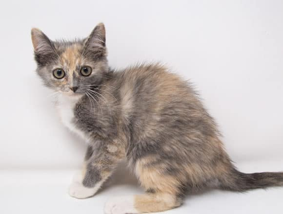 Millie – Adopted
