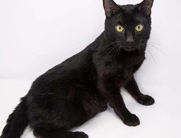 Mr. Meowgi-Adopted