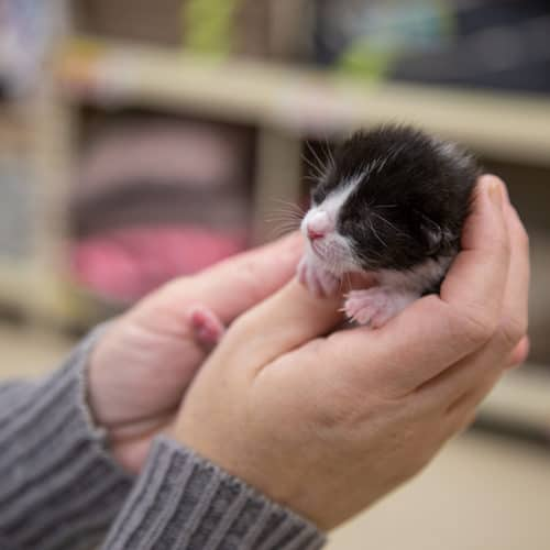 What To Do When You Find Kittens