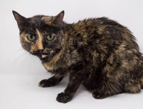 Sheba – Adopted