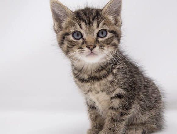 Marshall – Adopted