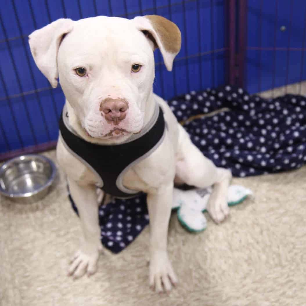 Canelo – Adopted