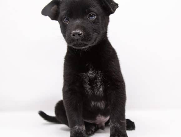 Coal – Adopted