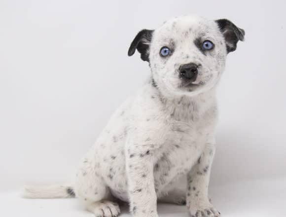 Kibo – Adopted