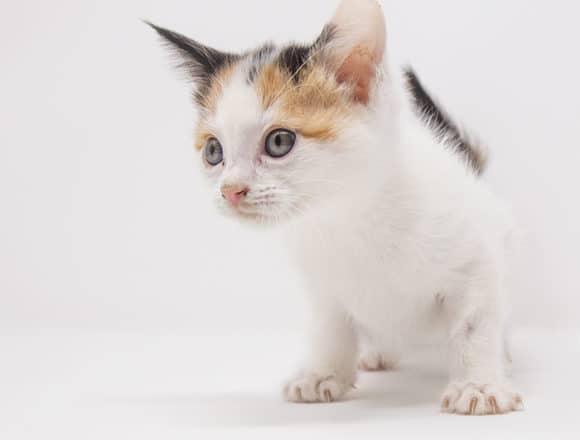 Mishka-Adopted
