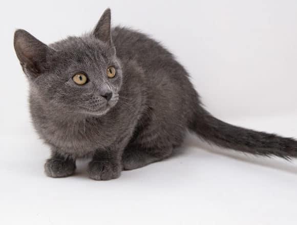 Arwen – Adopted
