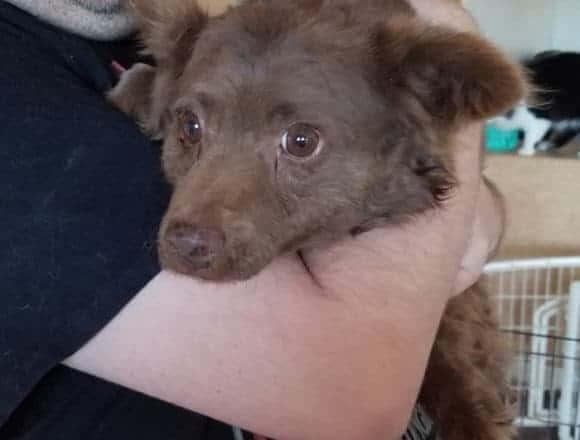 Brownie Girl – Adopted