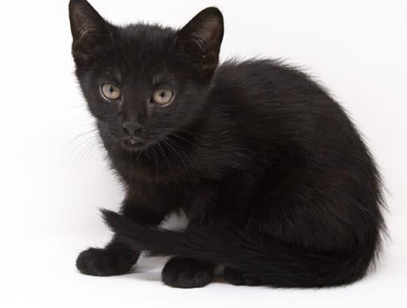 Elvis – Adopted