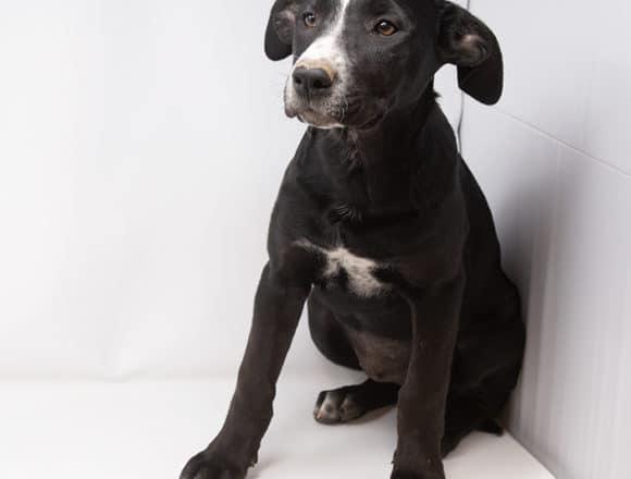 Indie – Adopted