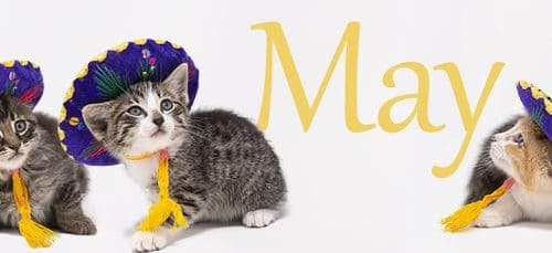 May Purr-esidents Press