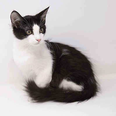 Orca – Adopted