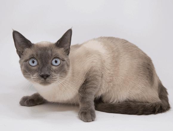 Thunder – Adopted