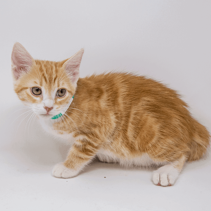 Belly – Adopted