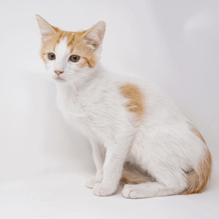 Butterbur – Adopted