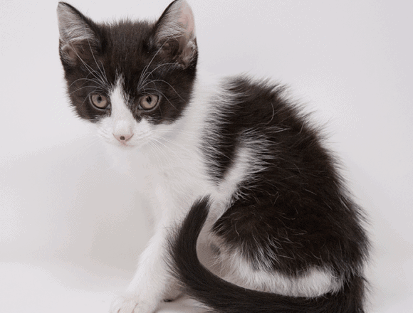 Cream – Adopted