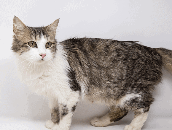 Jasmine – Adopted