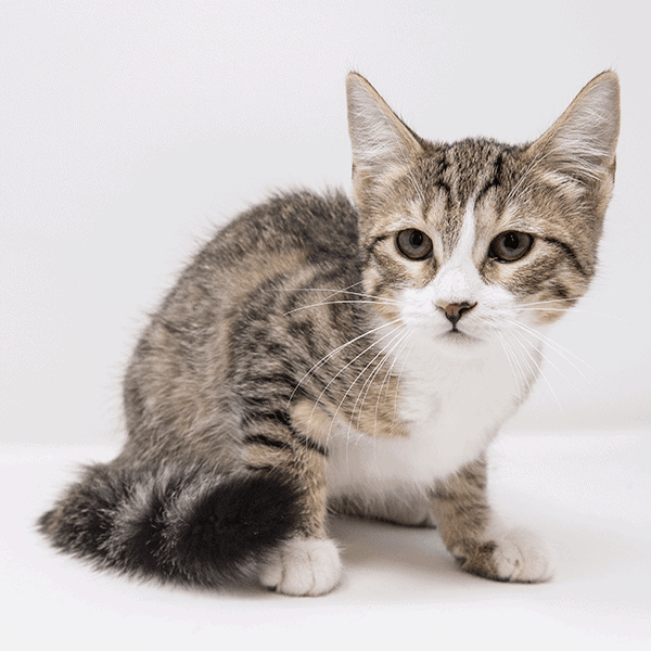Majbritt – Adopted